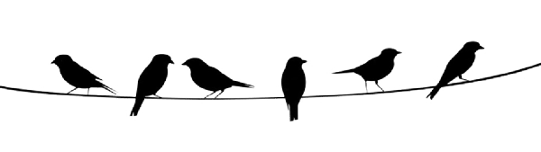 Vögel auf dem Seil